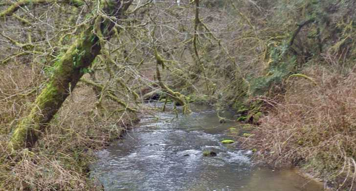 Looking upstream