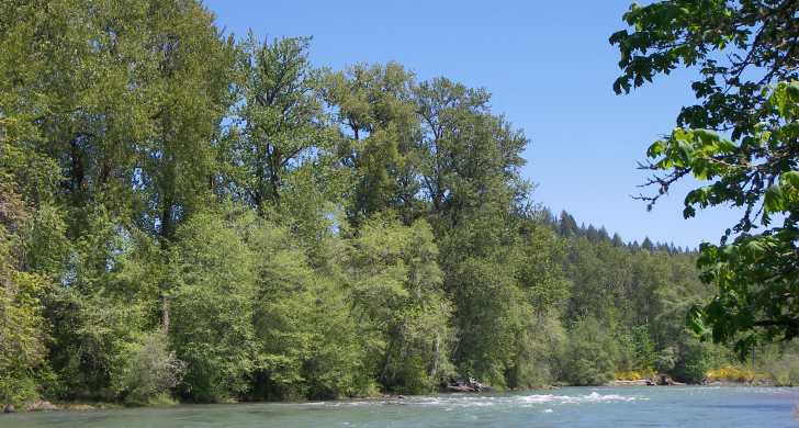 Rapids on the Middle Fork Willamette River