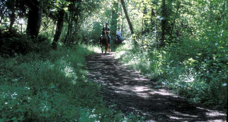 Horse and rider on a wooded park trail