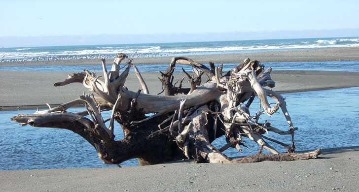 Big stump on the beach