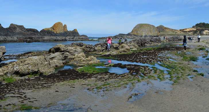 Seal Rock tidepools